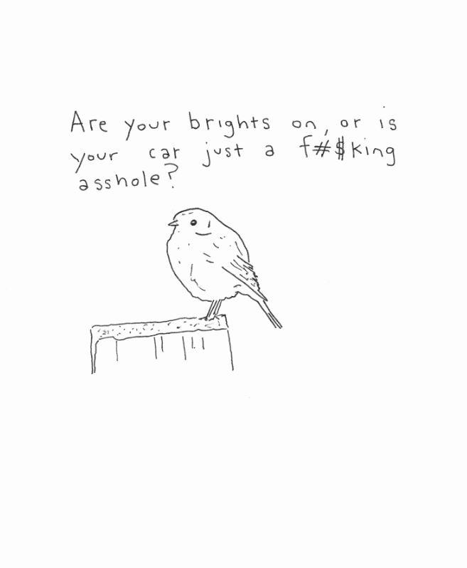 Bird Brights
